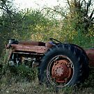 Old Timer by Susie Wieberg
