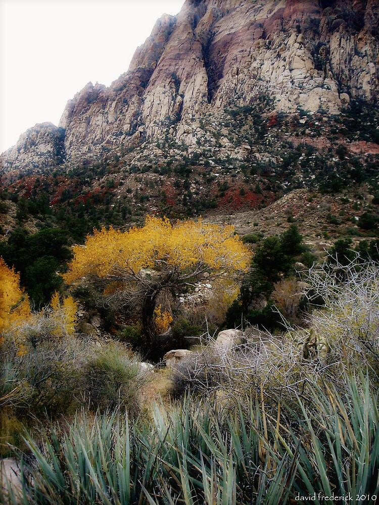 Autumn comes to Red Rock Canyon by David Frederick