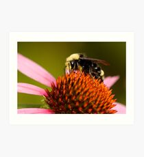 Bright-Eyed and Bushy-Tailed Pollinator of Flowers Art Print