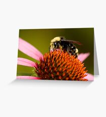 Bright-Eyed and Bushy-Tailed Pollinator of Flowers Greeting Card