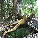 split Wood by Lynn  Gibbons