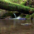 Corner Creek by Forrest Tainio