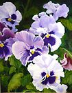 Pansies Delight #1(sold) by bettymmwong