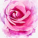 Watercolor Rose by amira