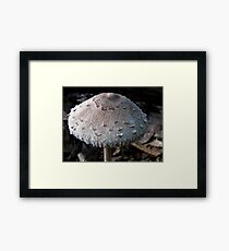 Scaly Cap Framed Print