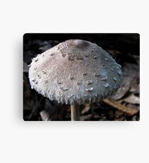 Scaly Cap Canvas Print