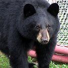 Teddy Bear by Rose Gallik