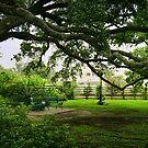 Marshall Park by Jonicool