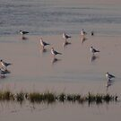 Seagulls in the sunset by Carol Dumousseau