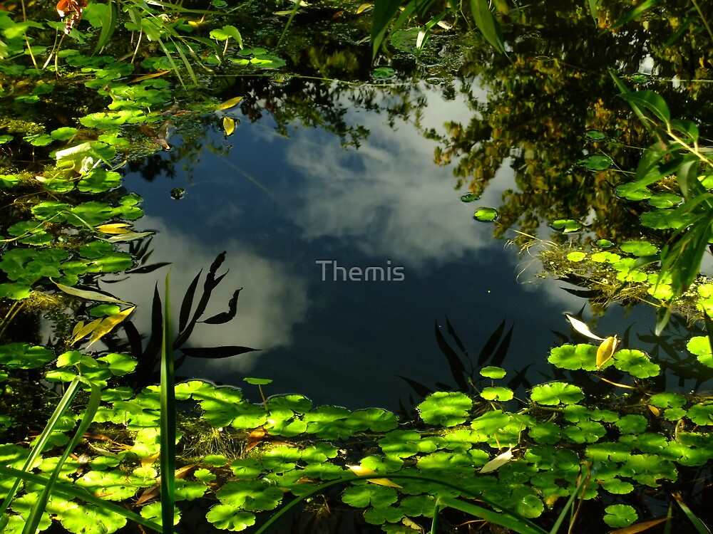Green window frame by Themis