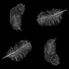 Feathers  by rlnielsen4