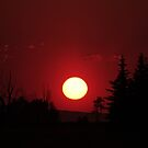 Low Sun Silhouettes by Daniel Owens