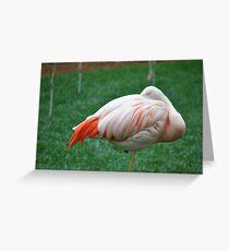 Sleeping Chilean Flamingo Greeting Card
