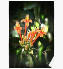 Tropical Orange Flowers Poster