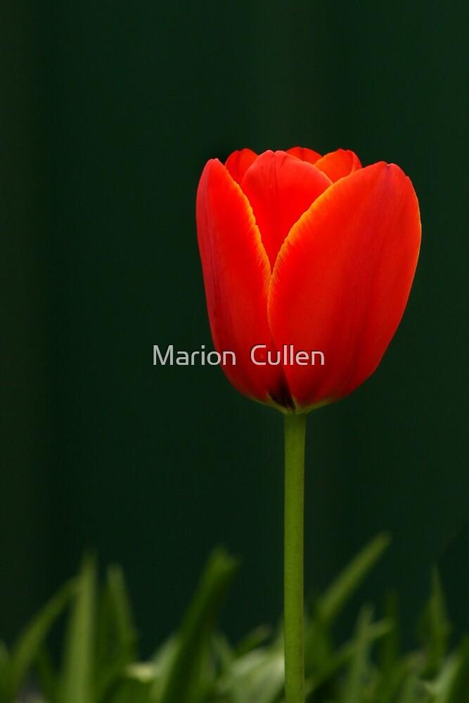 la lanterne de nature by Marion  Cullen