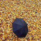 Leaf Showers by David Piszczek