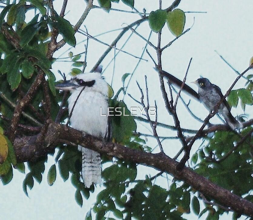Kookaburra, kookaburra In my tree... HA HA HA HA HA HA HA  by LESLEY BUtler