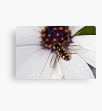 Insect Canvas Print