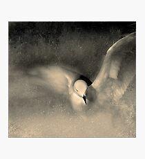 grace Photographic Print