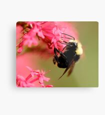 Clinging to a Cliff of Pink Metal Print