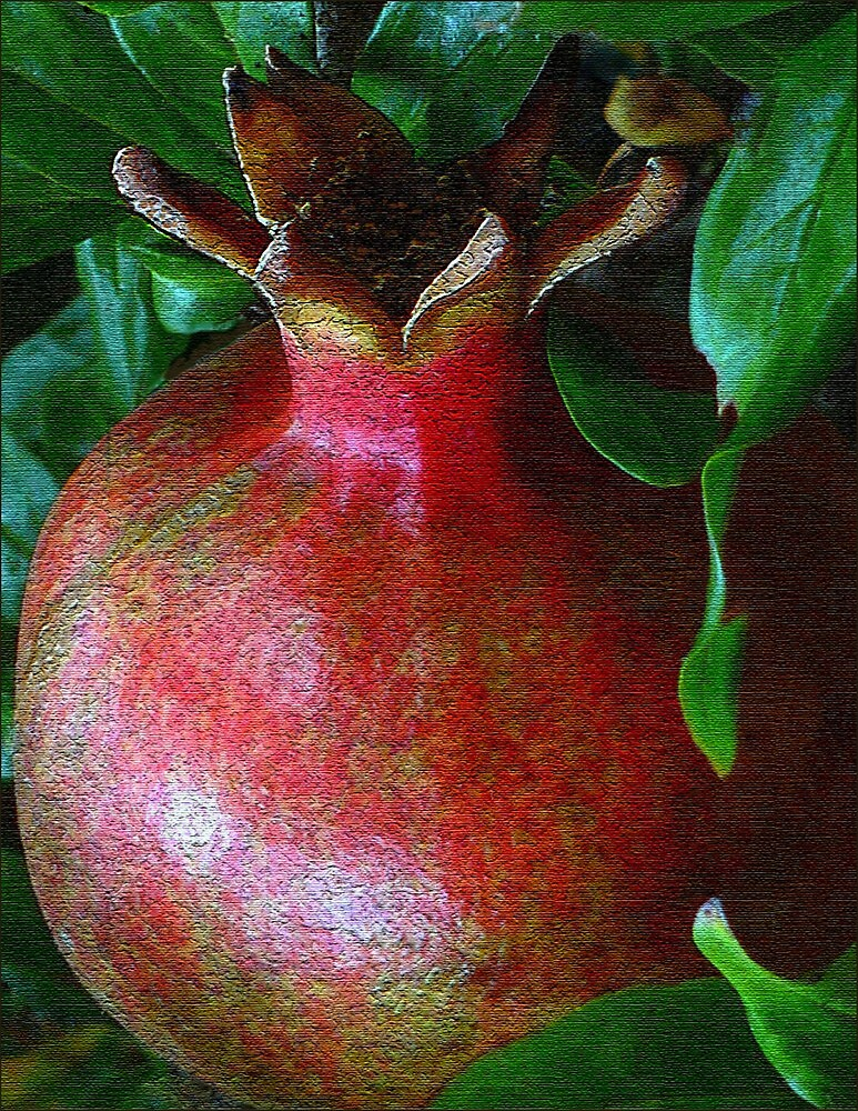 A Pomegranate Grows by paintingsheep