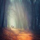 liquid dreams - forest hike at sunrise by Dirk Wuestenhagen