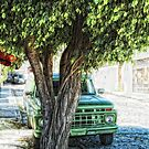 Truck & Tree (photo) by James Zickmantel