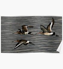 Flight Of The Godwits Poster