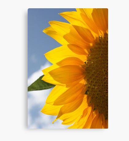 sunny side Canvas Print