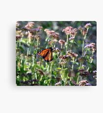 Morning Butterfly Canvas Print