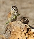 A feast fit for a chipmunk by Anthony Brewer