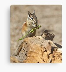 A feast fit for a chipmunk Metal Print