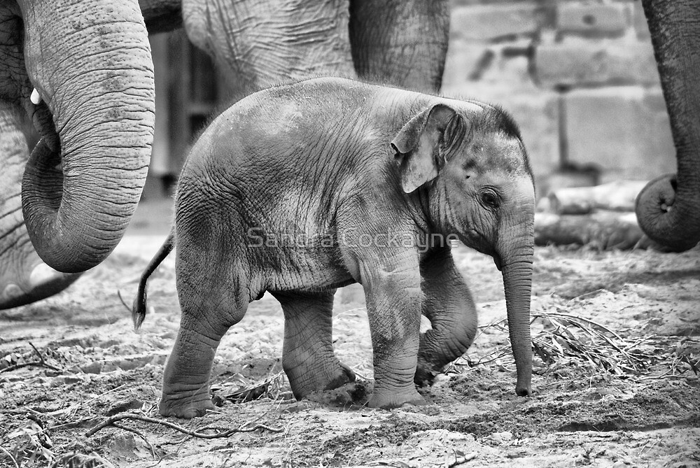 Mummy...........Please Don't Leave Me........ by Sandra Cockayne