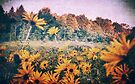 Yellow Flowers At Sunrise by Aaron Campbell
