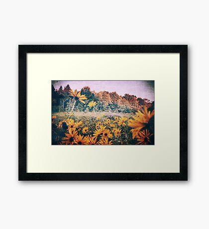 Yellow Flowers At Sunrise Framed Print