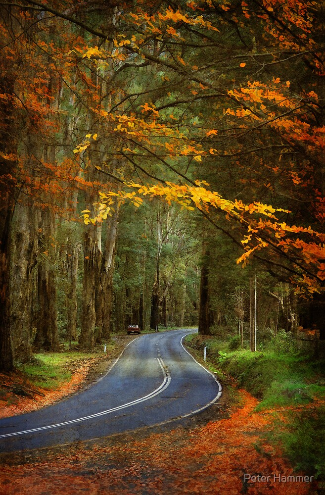 Autumn in the Dandenong Ranges #2 by Peter Hammer