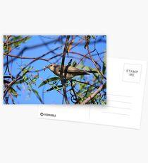 Endangered Species Postcards