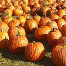 Pumpkins 'R Us by HelmD