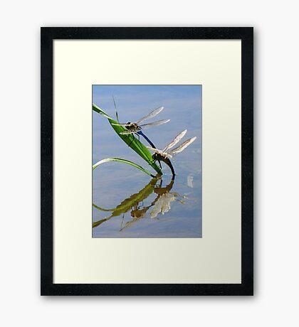 Dragonfly Love ~ Common Green Darner Framed Print