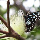 Flutter By by Annie Smit