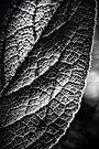 Kind of Spooky Leaf by Bob Larson