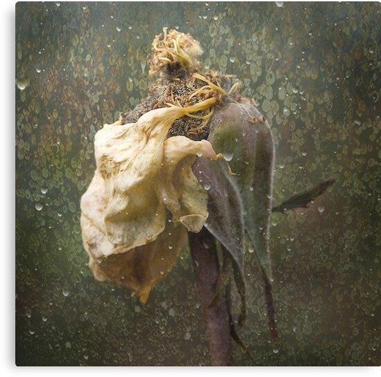 Rust 'n Roses ~ No 18 by Rosalie Dale
