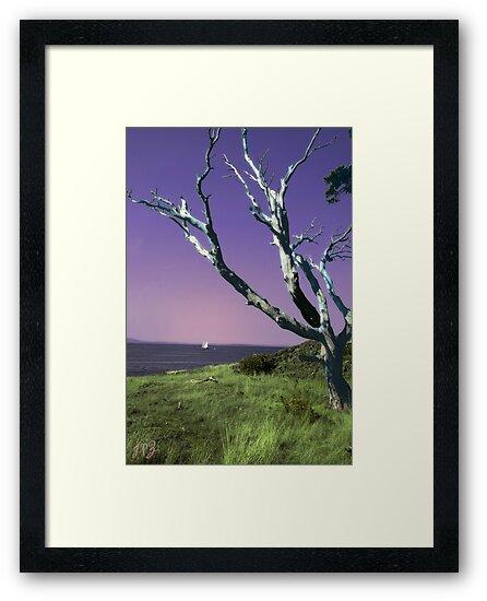 Desolate Tree (colorized) by James Zickmantel
