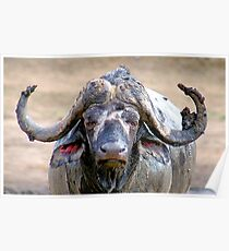 WHEN THE AFRICAN BUFFALO TAKES A MUD BATH Poster