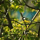 Great Tit by Danny Roozen