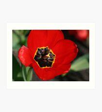 Floral Intricacy Art Print