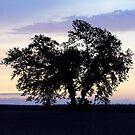 Daybreak on the Prairie by Brian Gaynor