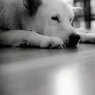 Sandy_01 by james smith