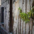 Turkish Street Scene: Peppers On The Wall by Josh Wentz