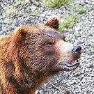 I Bear To Differ! by Alex Preiss